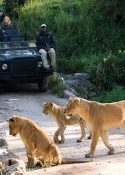 Lion-Sands-Game-Reserve-10